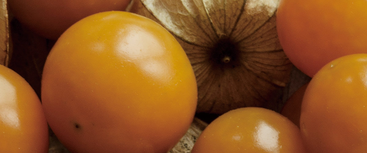 MINNA DE HOZUKI - 食用ほおずき・フルーツほおずきの栽培と加工製品の販売 - 新潟県妙高市